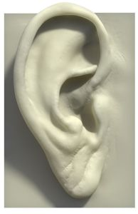 human ear model | Balanced Bodycare
